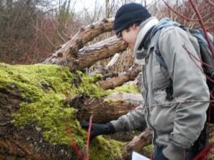 Always check fallen trees for fascinating fungi and hibernating mini beasts!