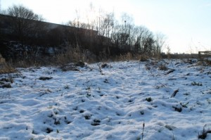Recent snowfall covers any early shoots and can prevent them from photosynthesizing.