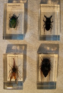 From top left clockwise: The Emerald Beetle, the Stag Beetle, the Lantern Bug and the Beautiful Cicada.