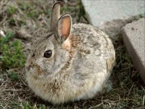 Why Do Rabbits Eat Human Hair 17