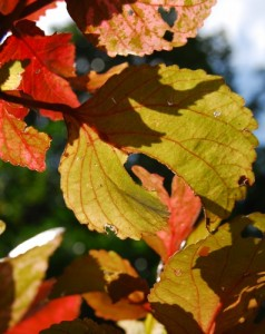 Reds, yellows and golds. The leaves are putting on a show in November, but what causes this dramatic change?