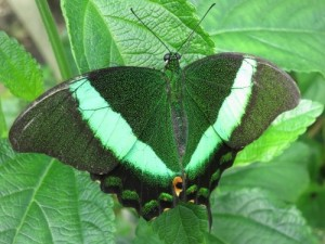 People have been fascinated in the beautiful butterfly right across the world due to their amazing colours.