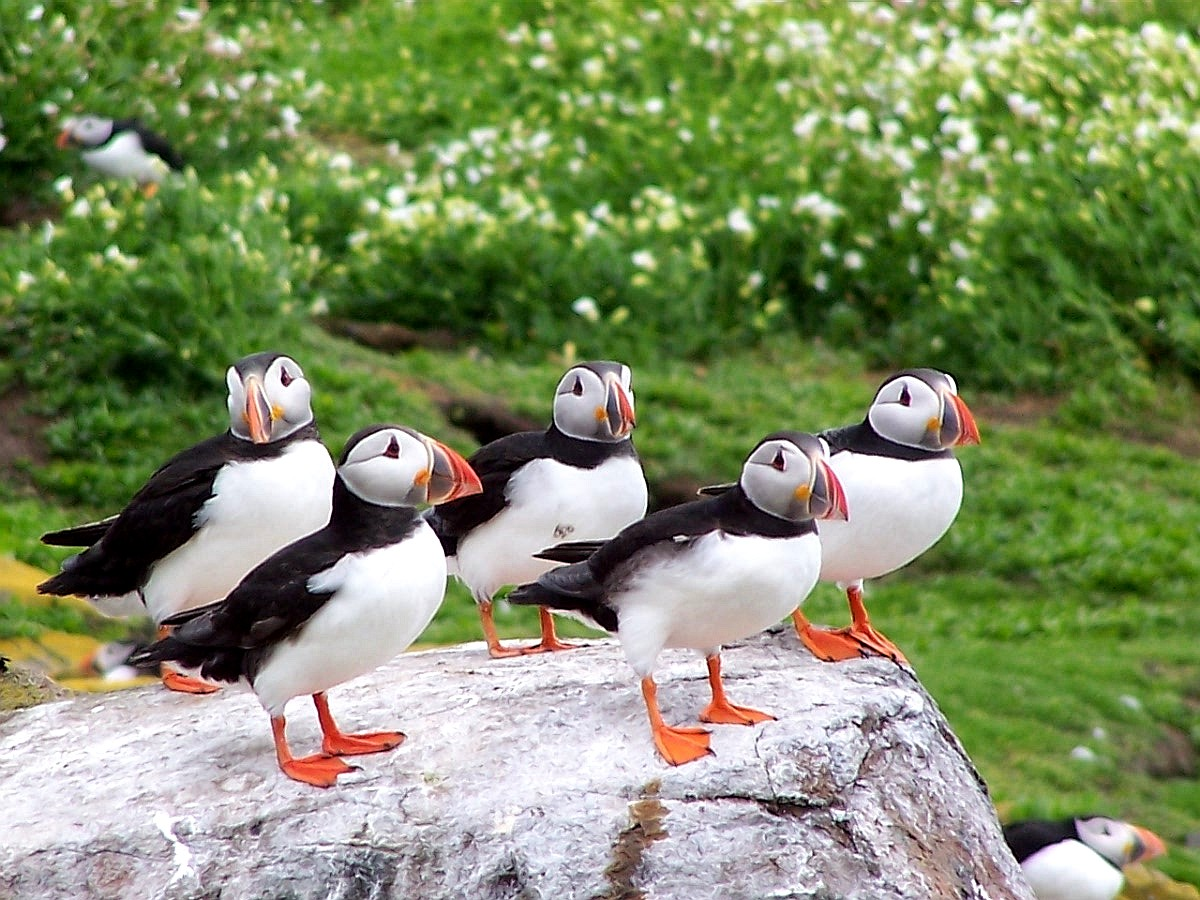 Visiting wild destinations can offer brilliant rewards, such as these stunning puffins.