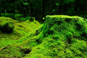 Moss grows in damp, dark areas.